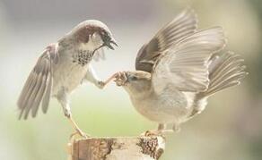 两只小鸟的快乐